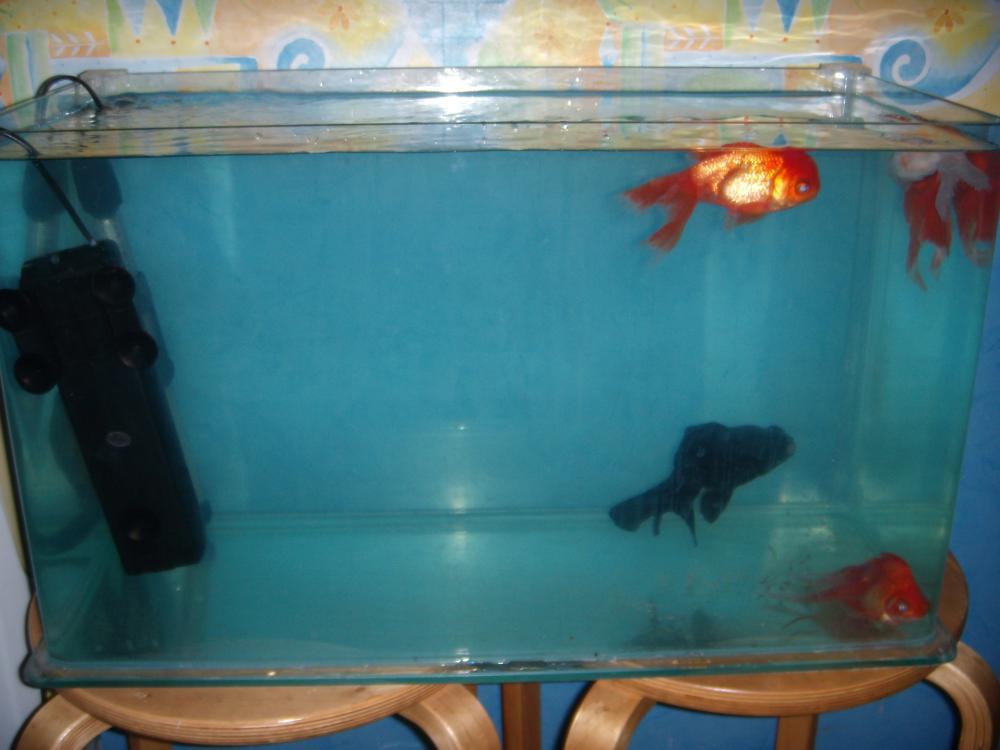 Карантинный аквариум 2