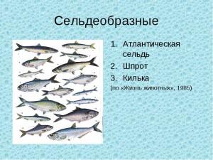 Систематика рыб