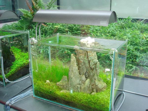 Освещение природного аквариума