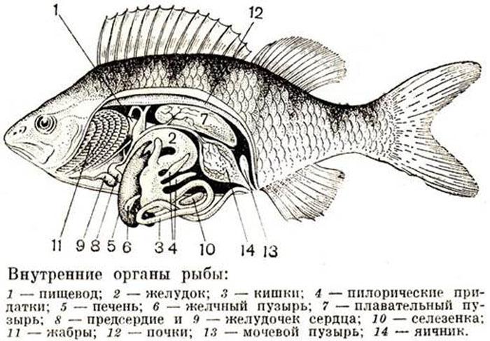 прпрапап
