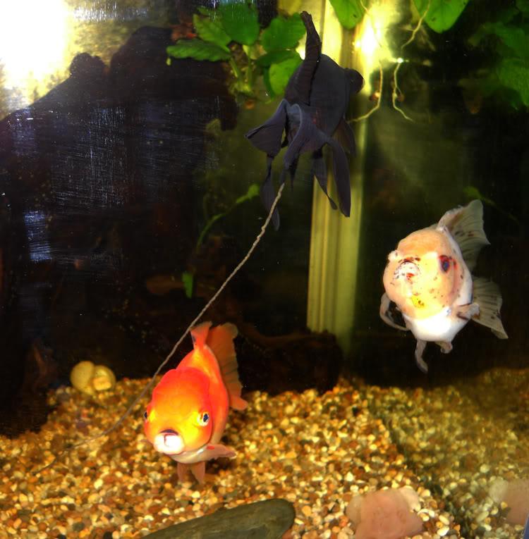 Нитевидные экскременты рыбы
