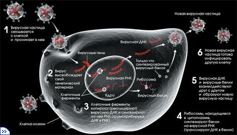 Вирусы водных животных Акваловер Вирус