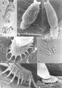 моногенеи 6548