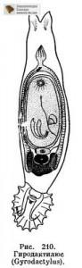 gyro343