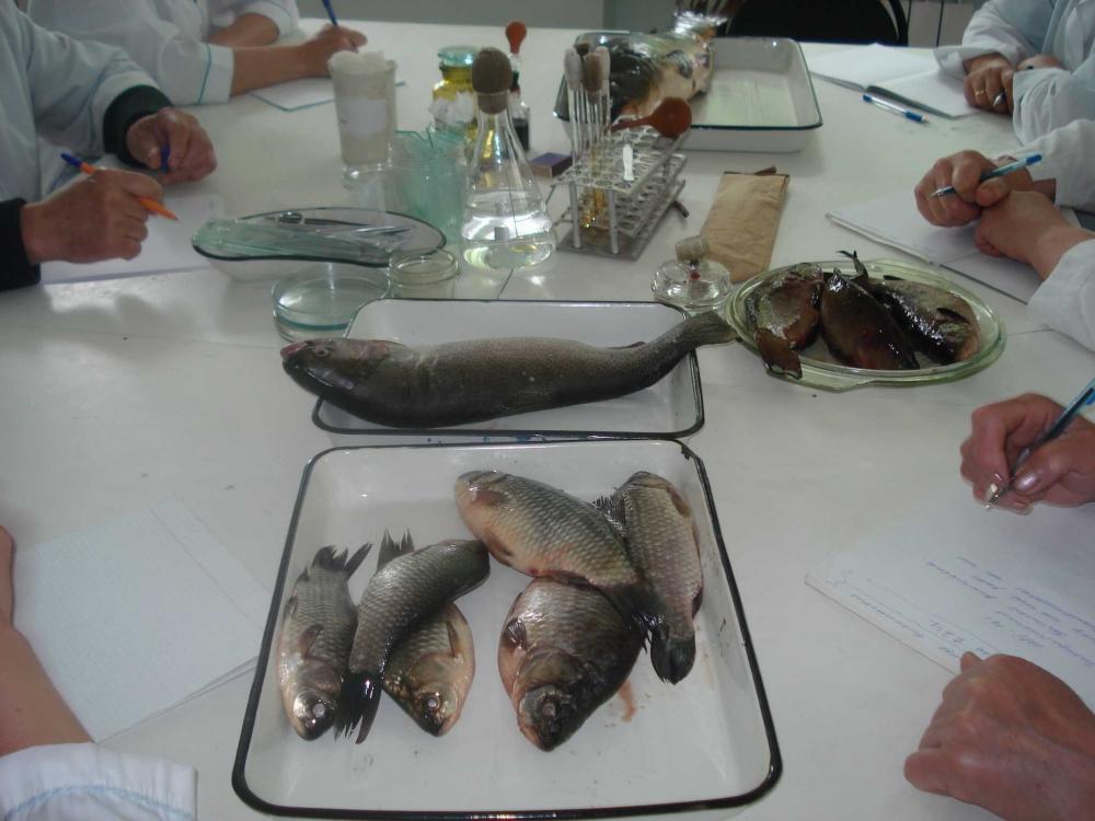 Исследования крови рыб