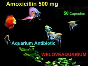 Антибиотики в аквариуме
