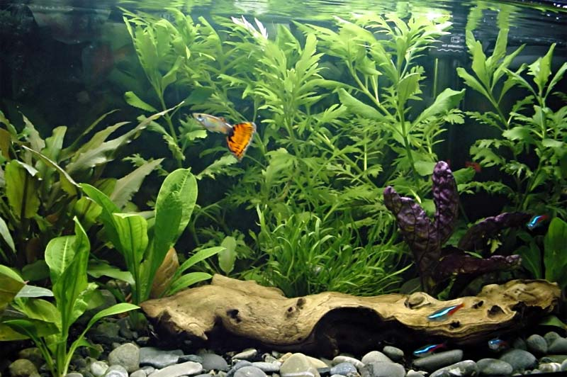 aquariu5566