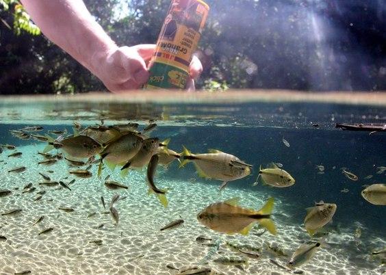 Кормление рыб 2