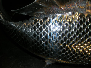 fish_scales_1