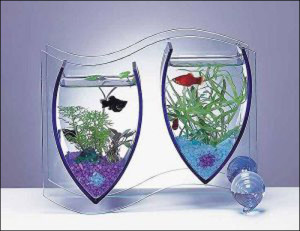 Aquarium10