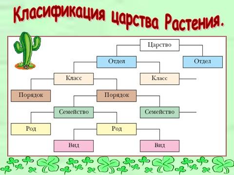 sistematika-rastenij