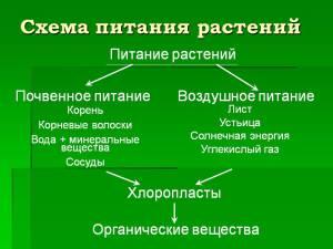 0005-005-Skhema-pitanija-rastenij