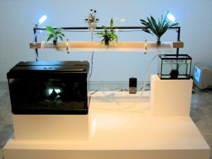hydroponics-fish-systems-8014