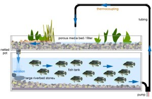 hydroponics-fish-systems444-8018