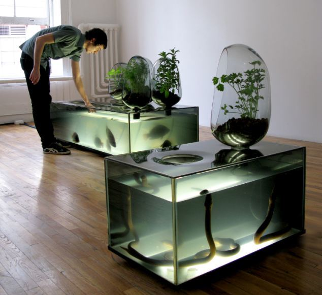 hydroponics-fish-systems-8019
