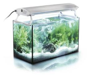 planted-aquge