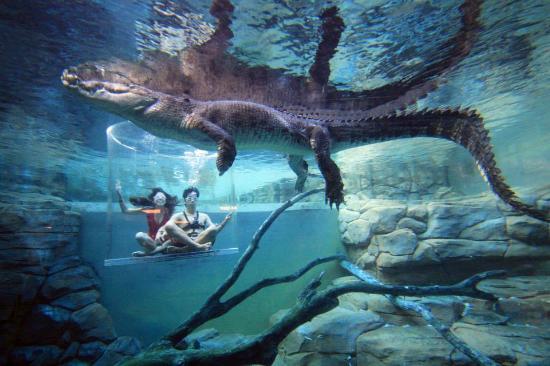 CrocosaurusCove05