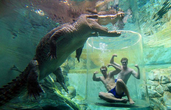 CrocosaurusCove07