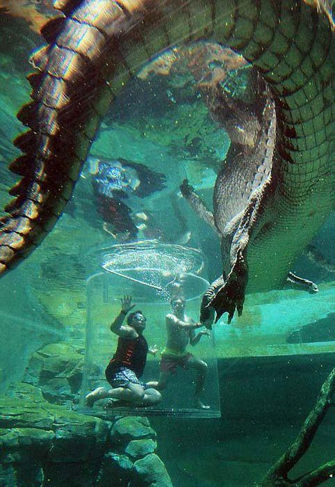 CrocosaurusCove08