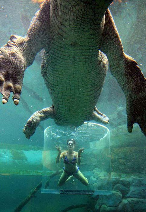 CrocosaurusCove10