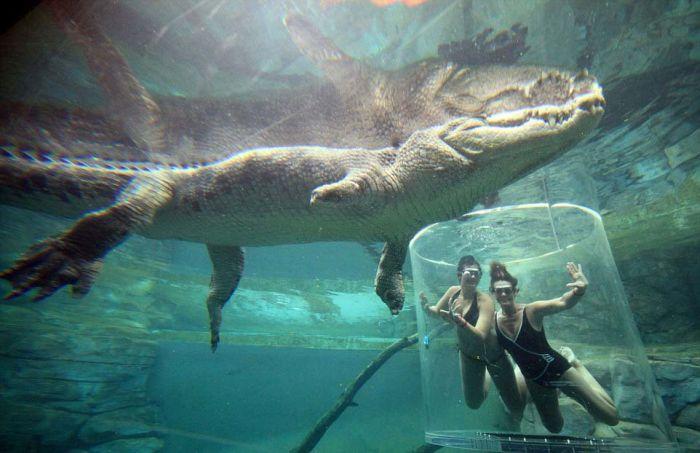 CrocosaurusCove11