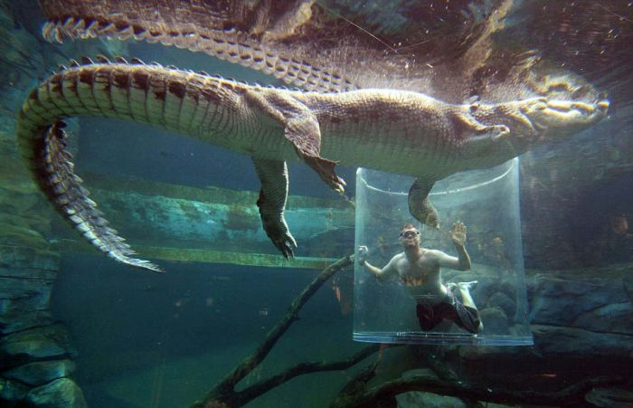 CrocosaurusCove13