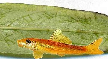 Повреждение рыбами 3