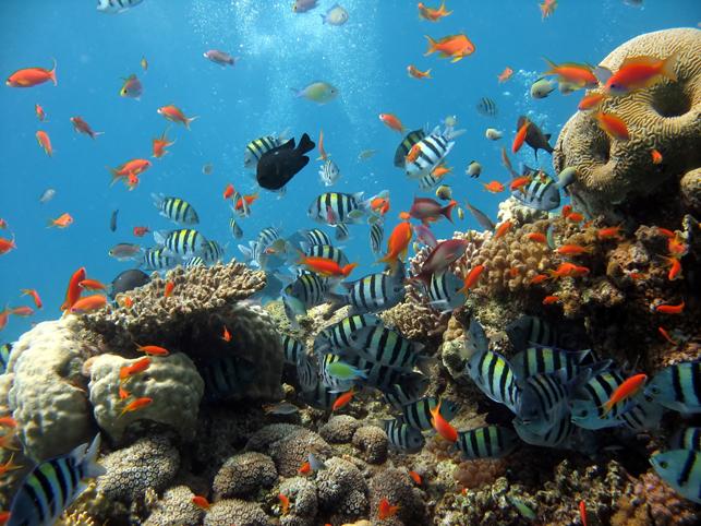 Рыбы рифа