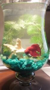 Рыбка в вазе