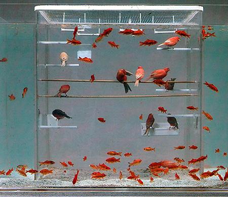 Аквариум с клеткой птиц