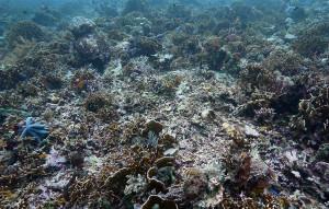 Разрушенный коралловый риф