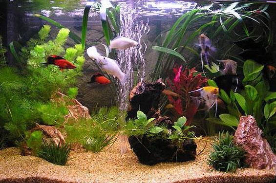 просто красивый аквариум