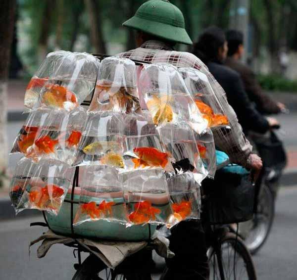 Перевозка рыб