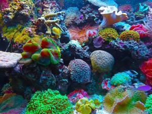 Рифы Большого Барьерного рифа