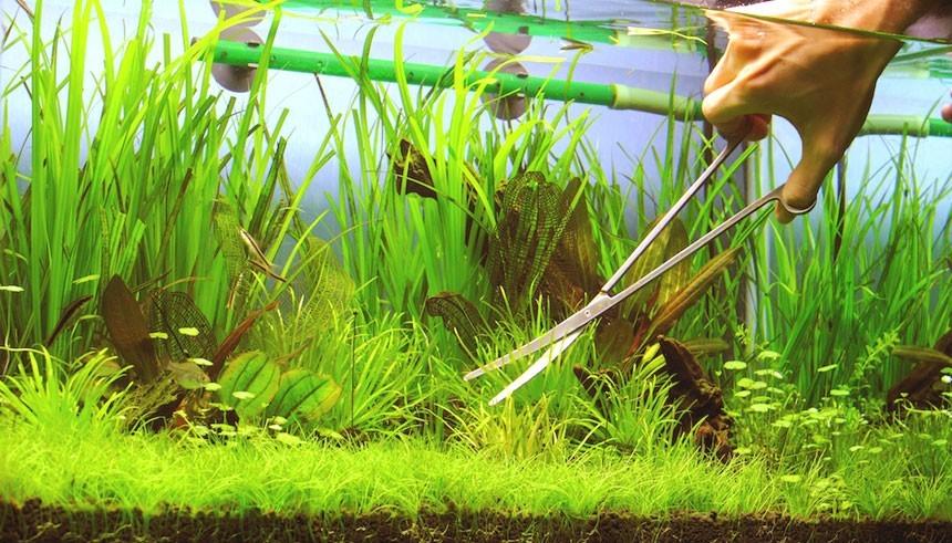 Уход за растениями в аквариуме