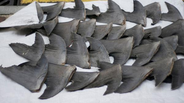 Акульи плавники