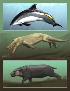Эволюция дельфинов