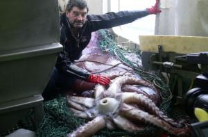 Гигантский кальмар2
