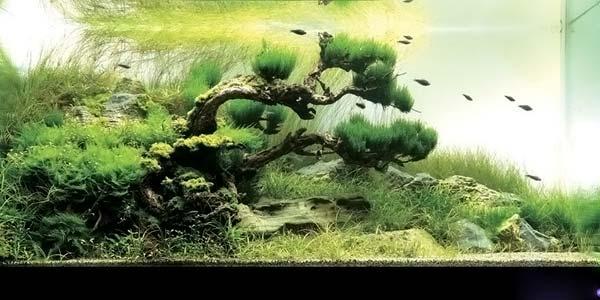 Природный аквариум 2