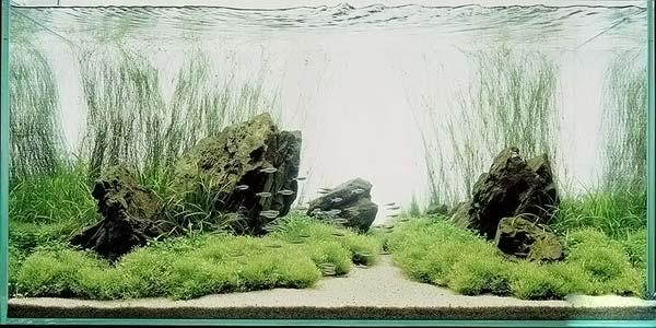 Природный аквариум 3