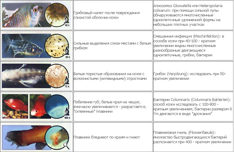 Справочник болезней рыб