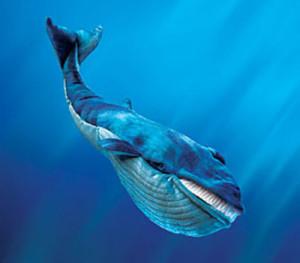 Усатый кит