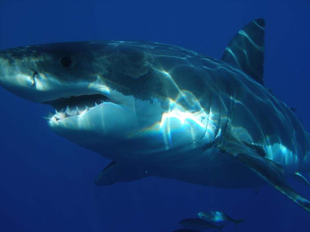 почему у кита такая глотка