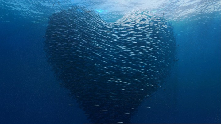 миграции рыб 2