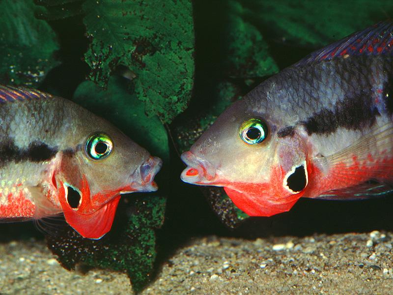поведение рыб в группе