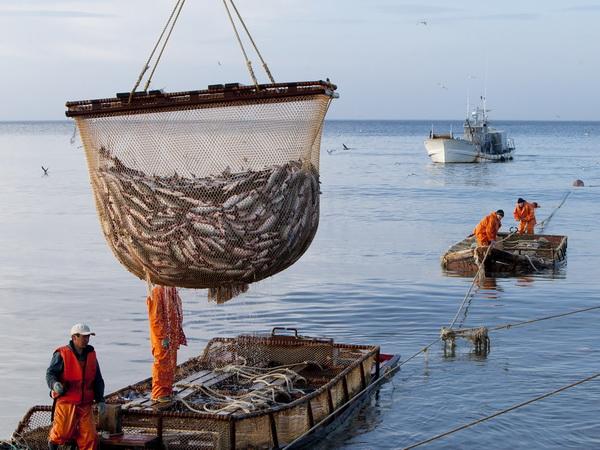 Вылов рыбы в море