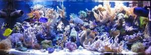 Организация морского аквариума