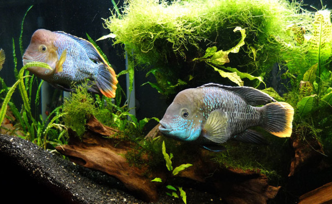 akara-v-aquariume